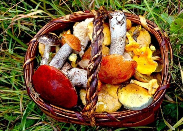 Вкусный грибной суп в мультиварке рецепт