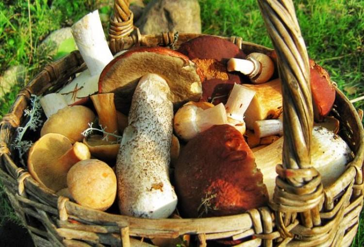 Разные лесные грибы